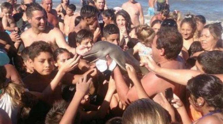 delfin del plata