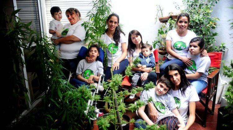 mama-cultiva