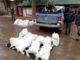 Incautan 29 kilos de cocaína y 503 de marihuana en un operativo en Villa Pehuenia